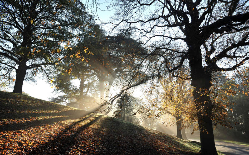 autumn-winter-trees-light-2000-pelling