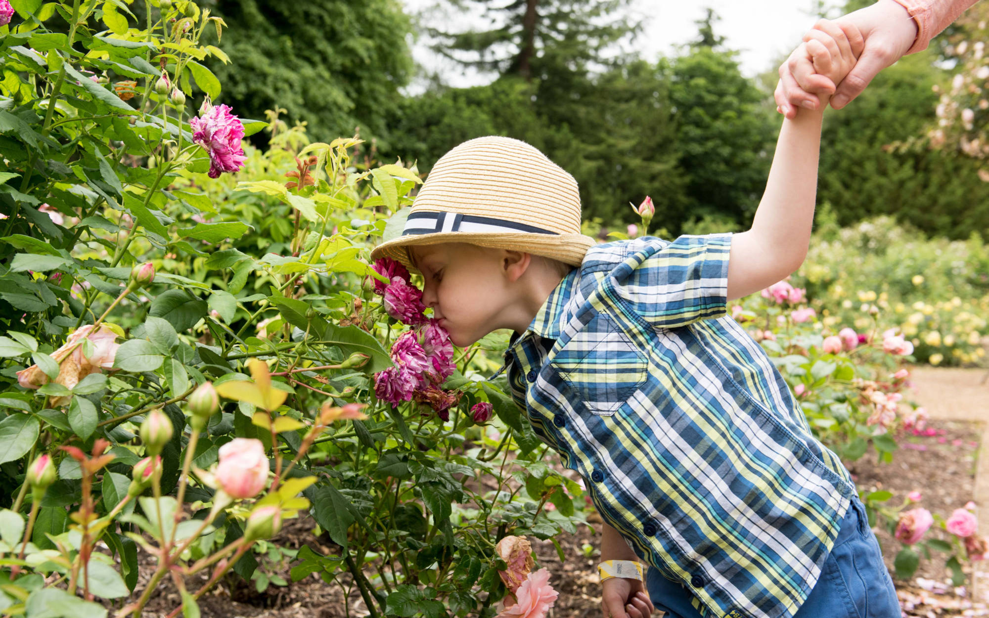 A young visitor smelling roses in the gardens
