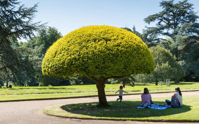mushroom-tree-family-3000-1875-Chris-Lacey