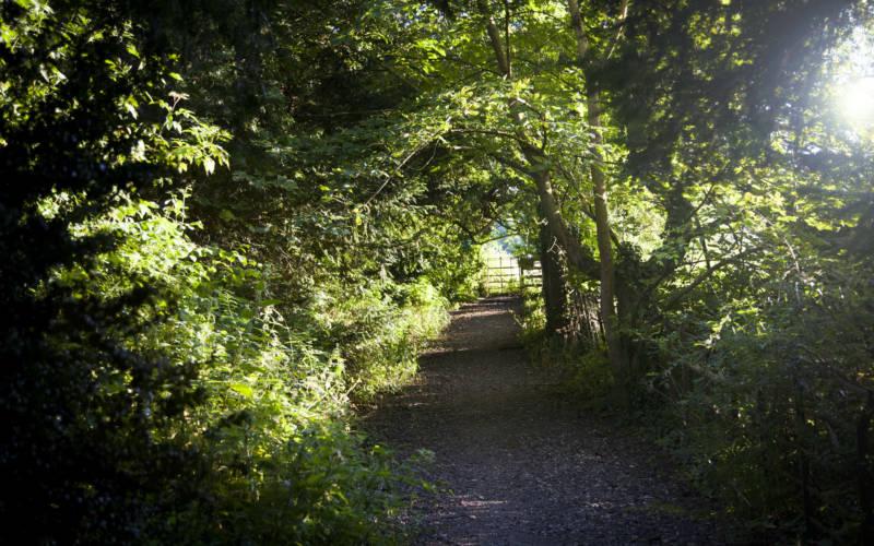 estate wooded pathway Sasa Savic ©Rothschild Foundation, Waddesdon Manor