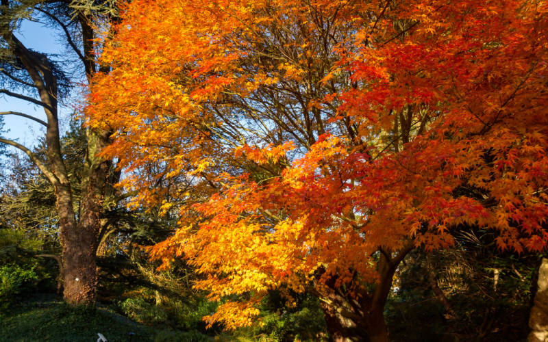autumn-colours-trees-tall-portrait-3000-lacey