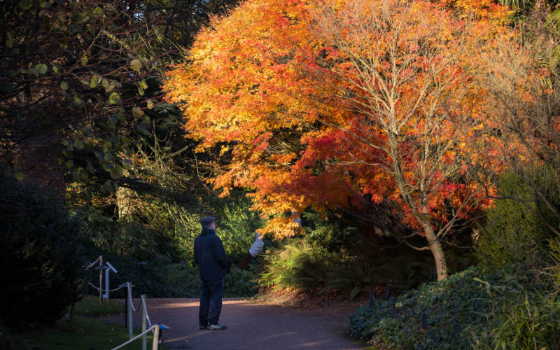 autumn-garden-visitor-3000-1875-chris-lacey