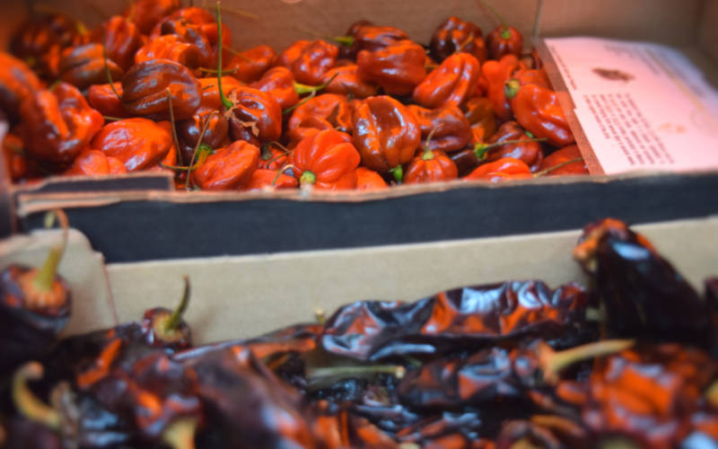 events chilli festival food chillies