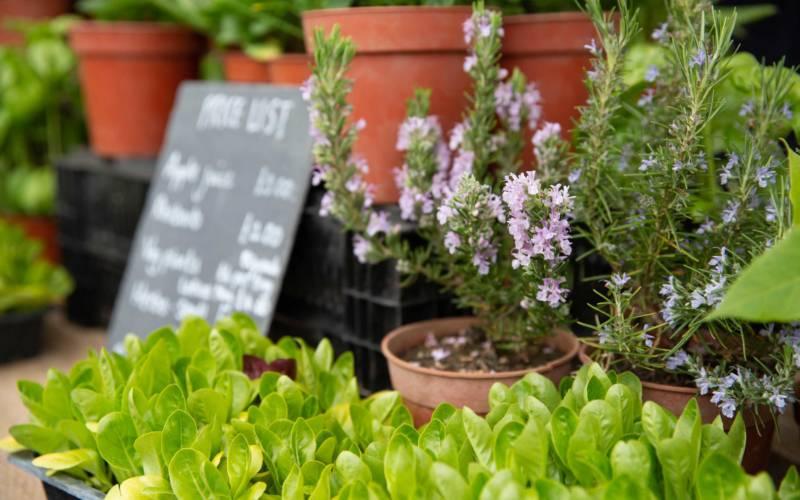 Herbs, Artisan Food Market