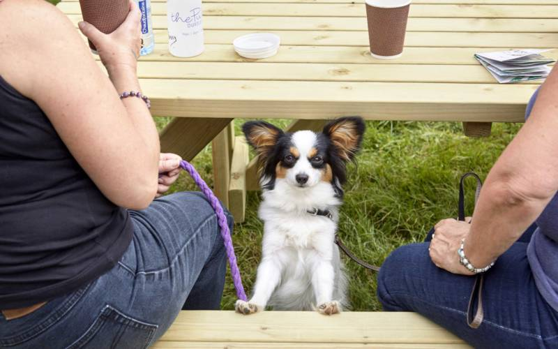 dog-event-bench-national-trust-images-arnhel-de-serra-1000-625