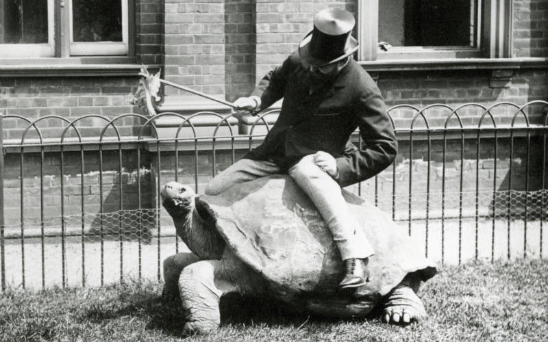 Walter Rothschild riding a tortoise and wearing a top hat
