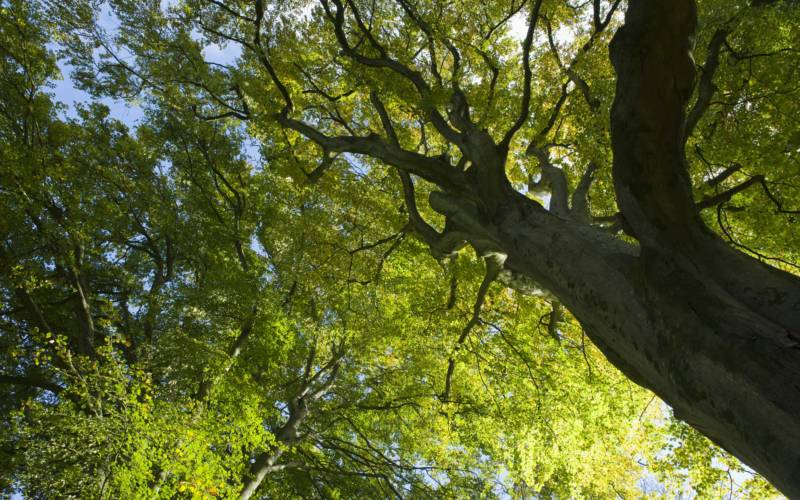 Beech-trees-National-Trust-Images-Mark-Bolton-3000-1875