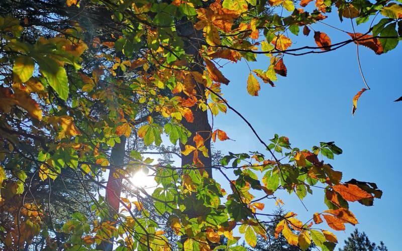 Autumn-trees-National-Trust-Waddesdon-Manor-3000