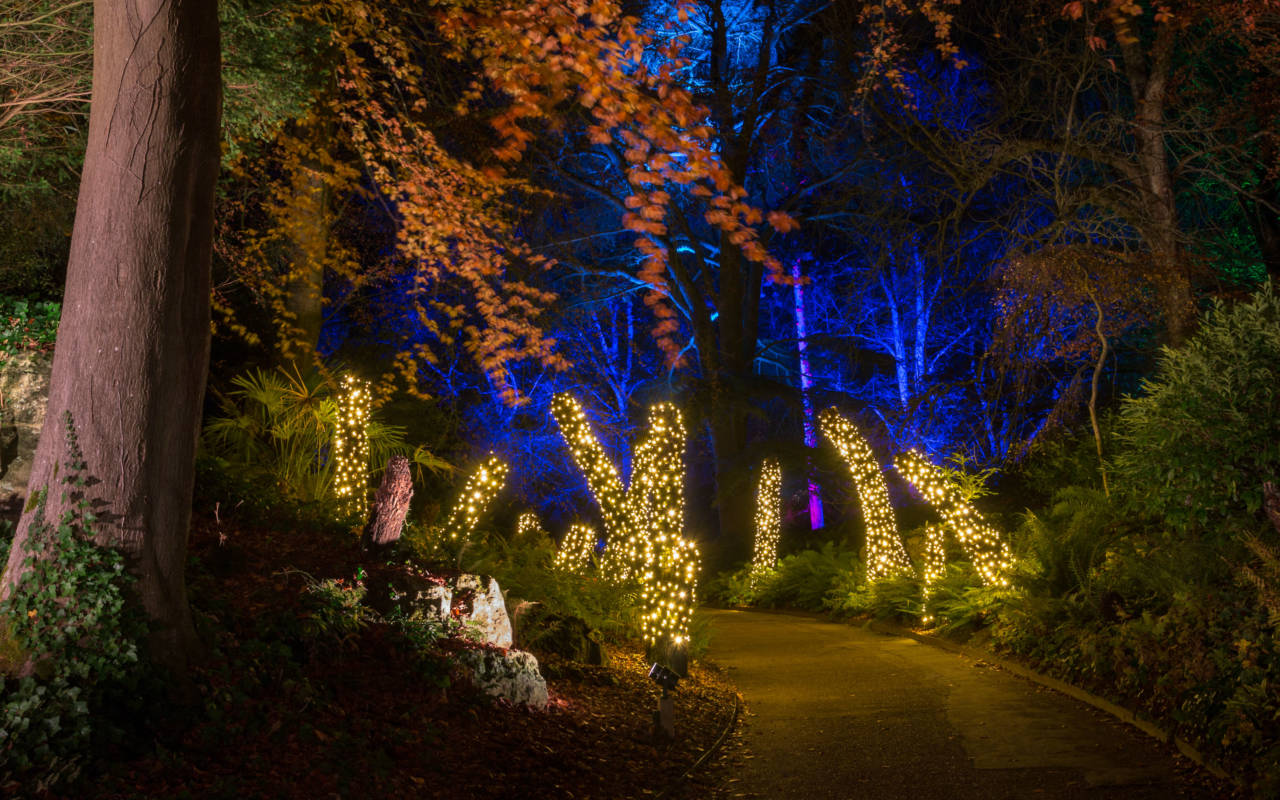 Aviary gardens lights at christmas