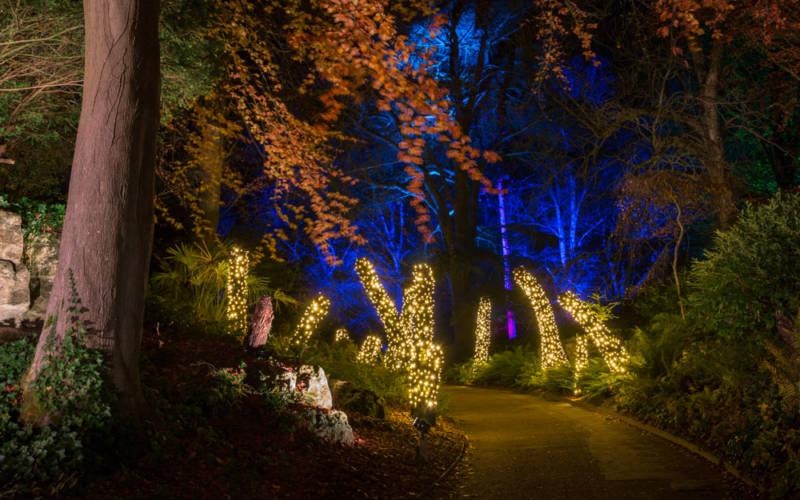 Winter Light Trail, Aviary