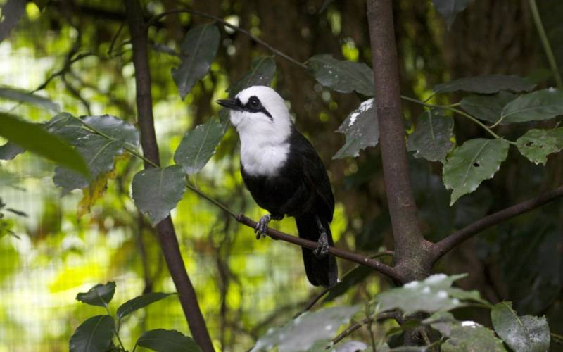 Waddesdon's Aviary and the Silent Forest campaign