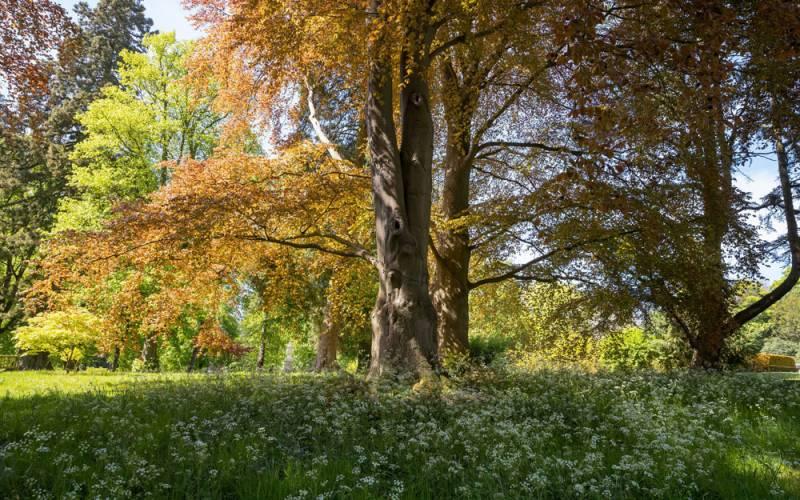 Trees full of autumn colour