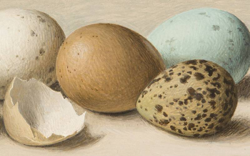 Painting of different coloured eggshells