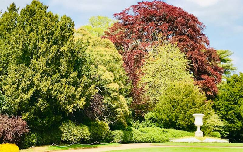 colouful-Trees-2