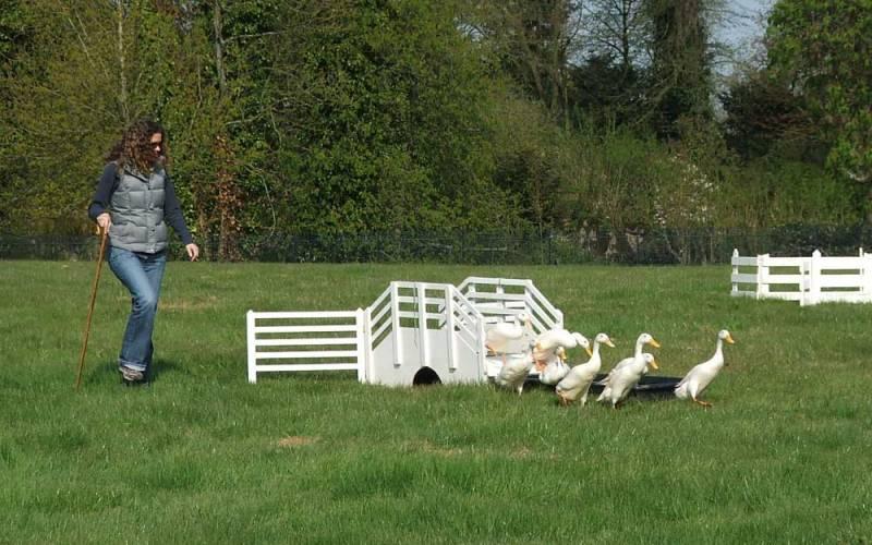 duck-herding-team-building-activity-1000x625