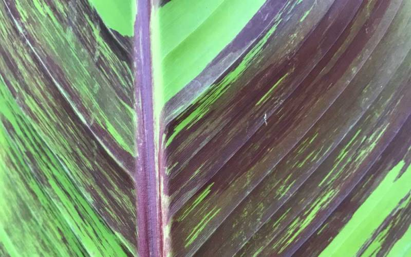 gardens-tropical-mound-leaf-detail-1000-625-mike-buffin
