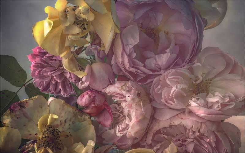 Nick Knight Roses