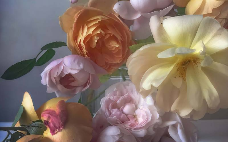 Coming Up Roses with Nick Knight