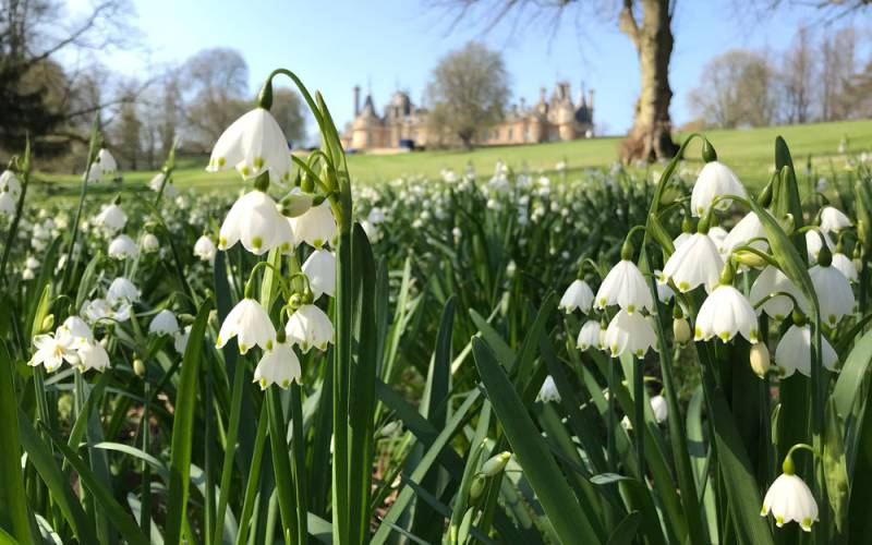 gardens-leucojum-below-parterre-march-spring-flower-1000-625