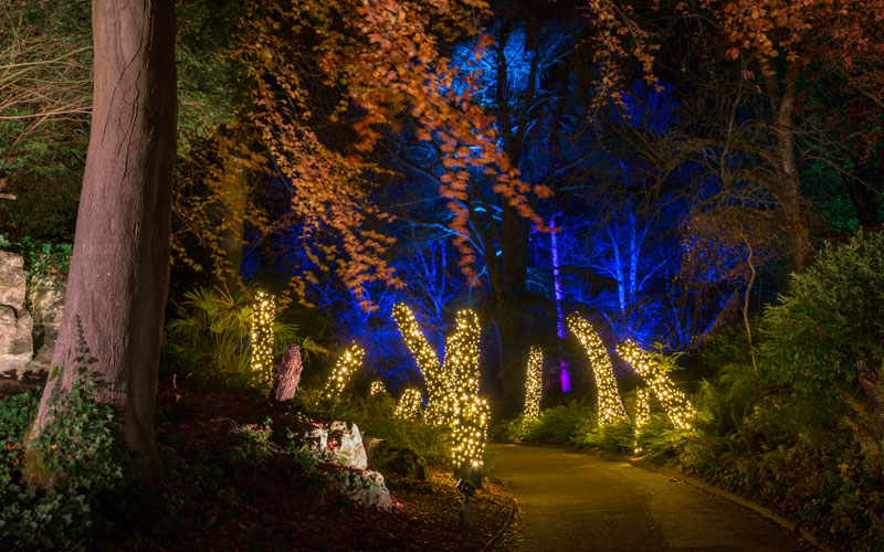 Tree ferns lit with fairy lights at Christmas