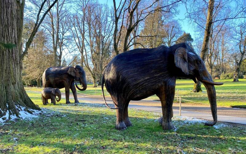 Elephant Family at Waddesdon, Feb (c) Waddesdon, A Rothschild House & Gardens. Photo Pippa Shirley