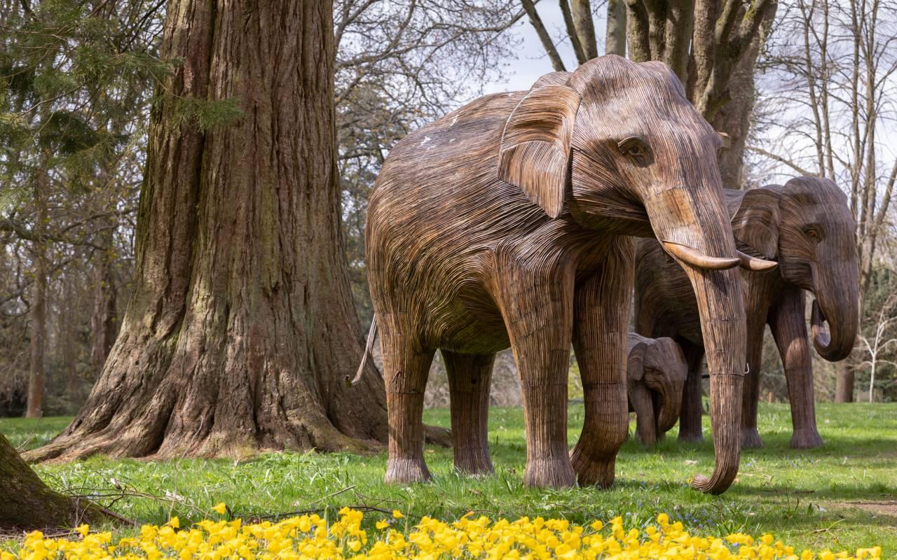 Elephant Family at Waddesdon