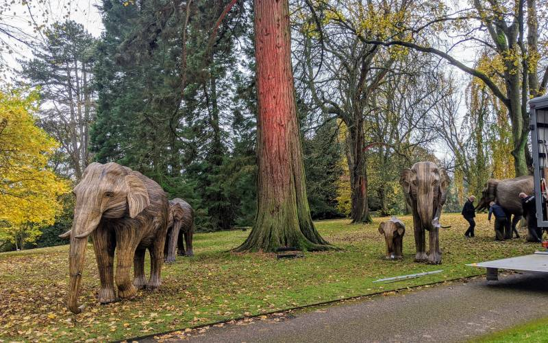 Elephants in their new home