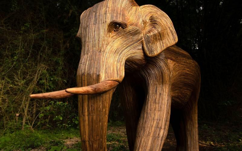 solo-tusker-(portrait)